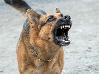 Criminal Law Update – Focus on Dangerous Dogs