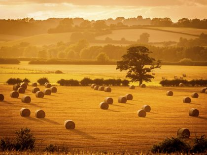 Arable Event 2019
